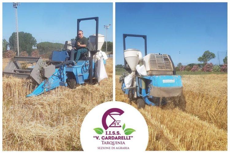 Cardarelli Tarquinia, la sezione di Agraria non si ferma: concluse le operazioni di trebbiatura della prova nazionale di frumento duro biologico