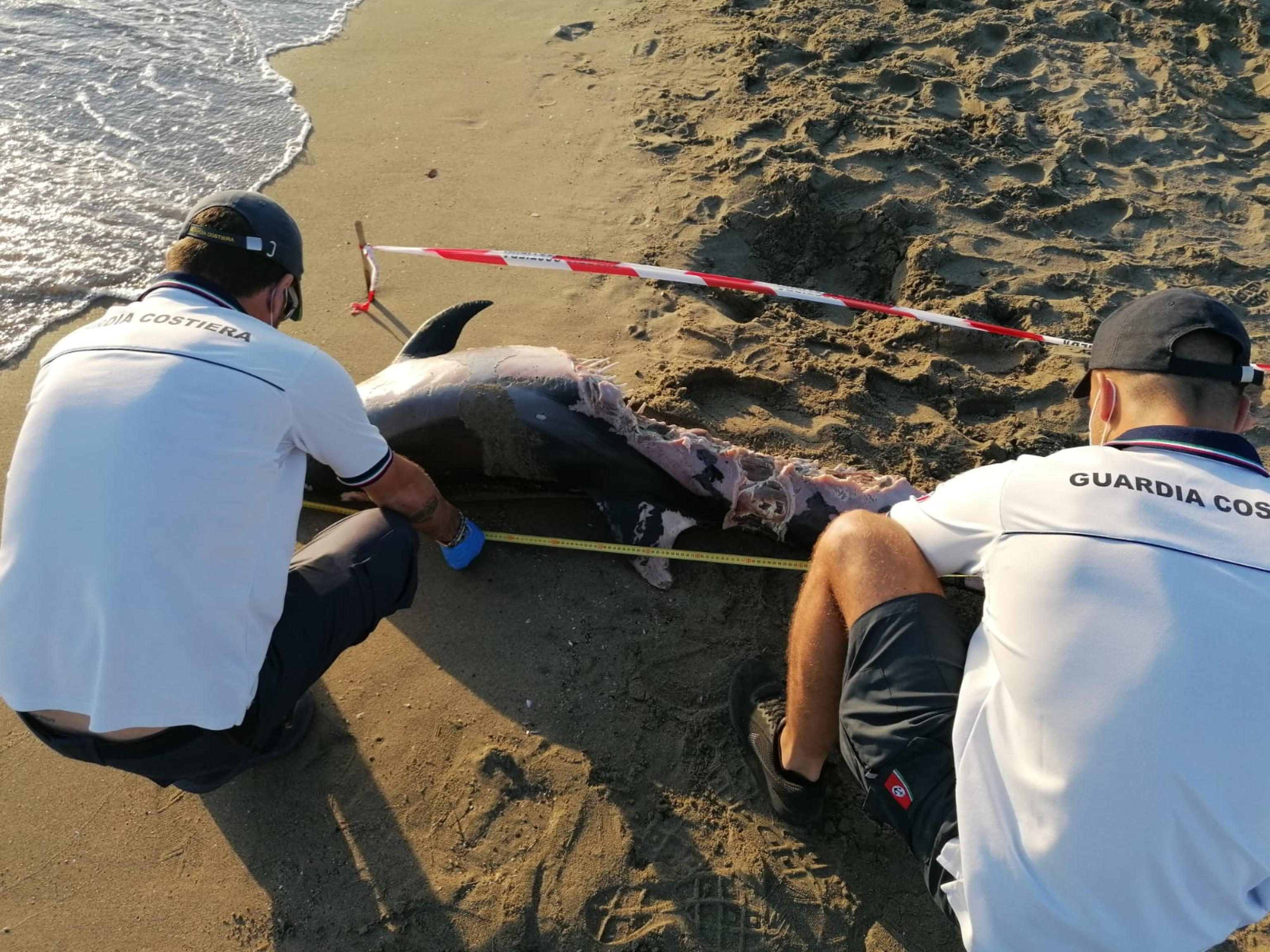 Due delfini trovati morti sulla costa di Fiumicino