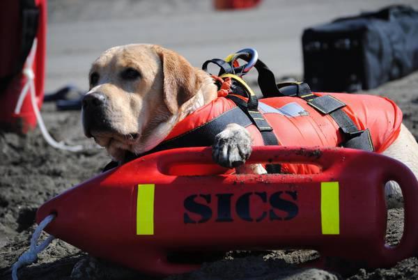 Sicurezza balneare, la Scuola italiana cani salvataggio da oggi a Tarquinia lido