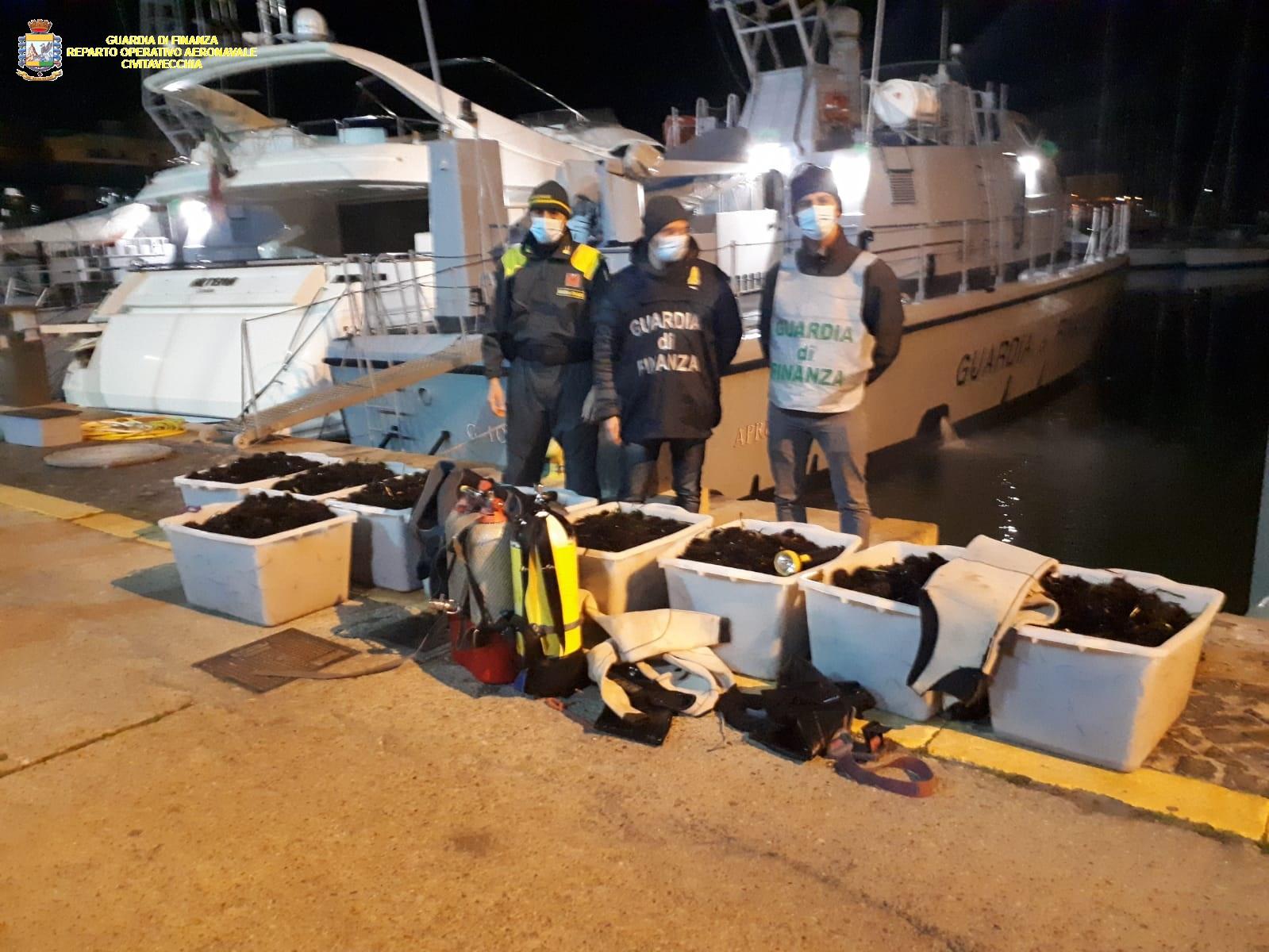 Frasca: la sezione navale della Gdf sequestra 12mila ricci